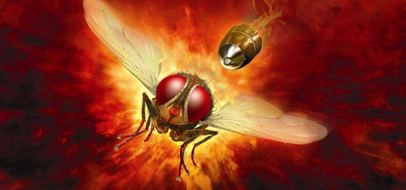 Makkhi – Die Rache der Fliege (Spielfilm, VoD)